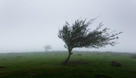 暴風警報とは風速何メートル?学校が休みになる基準と対策紹介
